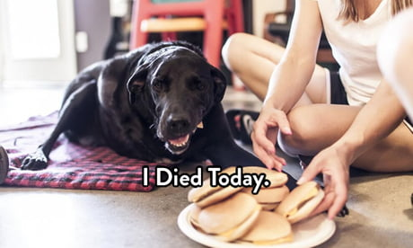 This Dog's Final Day Proves: We Should Live Every Day Like It's Our Last
